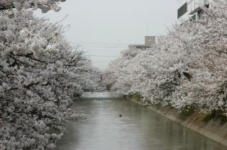 060419fukushimae.JPG
