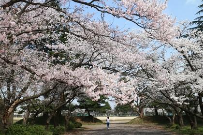 180404sakura.jpg